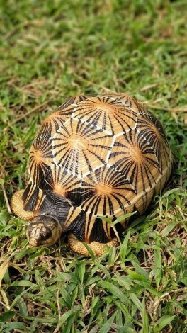 Wanted: Looking for any tortoise