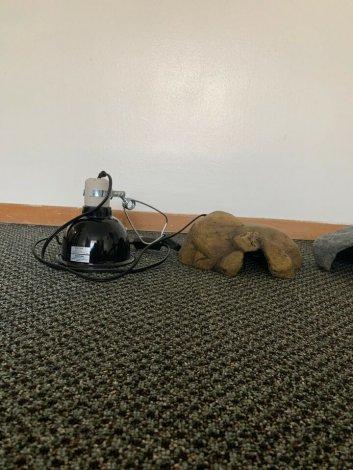 Reptile Hides & Lamp