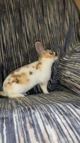 Adorable pet bunny